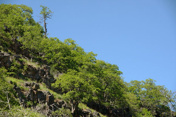Canyon Slope With Garry Oaks